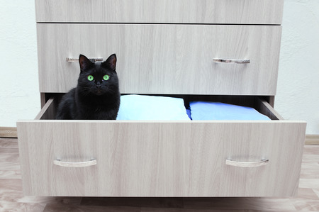 A black cat sits in an open chest drawer. Houses in the room.