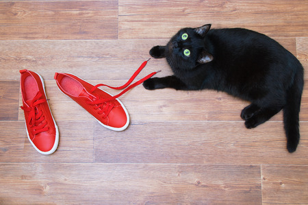 A black cat is playing on the floor with red sneakers.