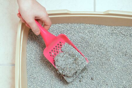 Hygiene for pets. Dry loose cat litter is collected in a plastic tray with a shovel.