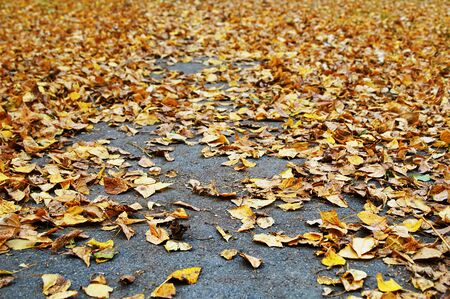 Old yellow leaves on the road in autumn afternoon. Bottom view.