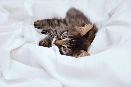 A little kitten lies on a white bedsheet. Looks at the camera. Close-up. Reklamní fotografie