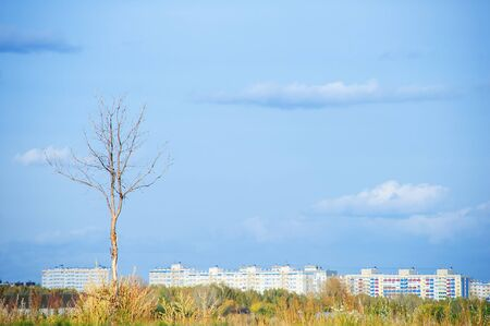 Lonely tree in the background of a sleeping area during the day in sunny weather.