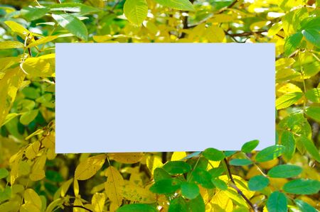 White blank sheet of paper on a background of autumn yellow foliage. Close-up.