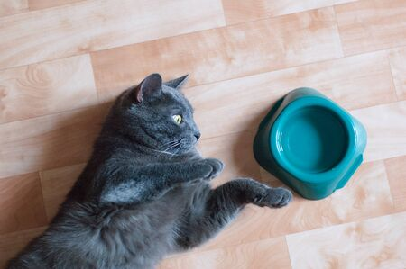 Gray cat on the floor of the room near a bowl of water. View from above Reklamní fotografie
