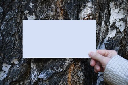 White blank sheet of paper in the hand of a caucasian woman on a background of birch bark. Close-up. Reklamní fotografie