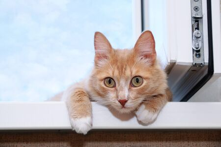 Portrait of a ginger cat on a windowsill lying on a background of sky with clouds.