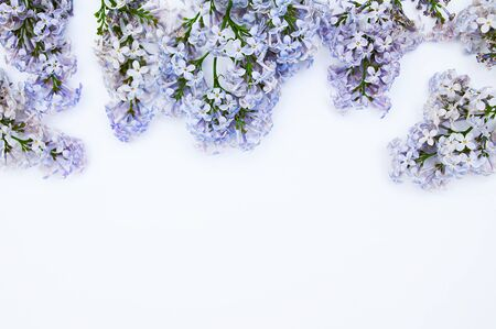 White background with branches of a common lilac. Place for text. View from above.