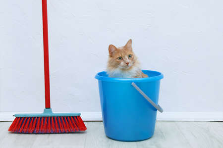 A beige cat in a bucket for cleaning the house and a red brush for sweeping.