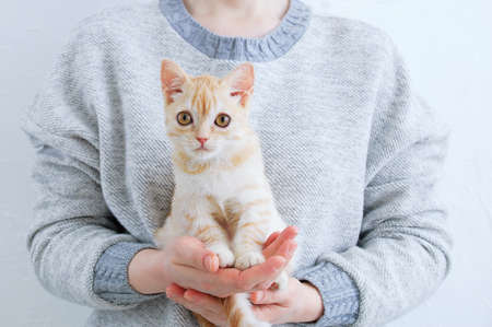 Small beige kitten in the hands of a Caucasian woman.