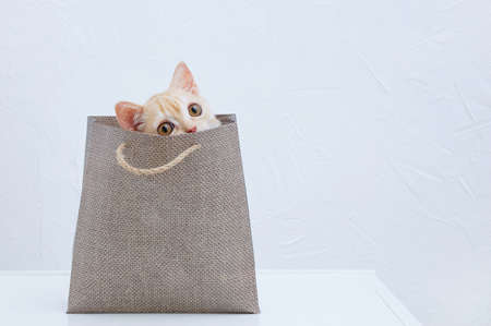 Little beige kitten sitting in a brown paper bag. White background.