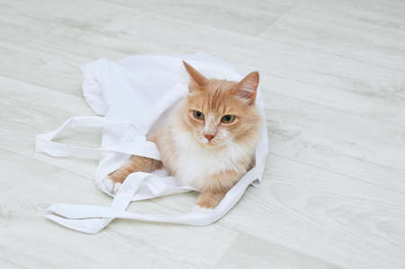 Zero waste concept. Beige cat on the floor of the room in a white cotton bag close-up.