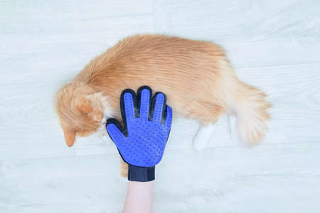 Combing the coat with beige cat glove behind the pet coat on the hand. View from above.