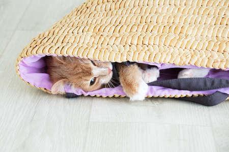 Beige cat lying on the floor in a wicker basket close-up.