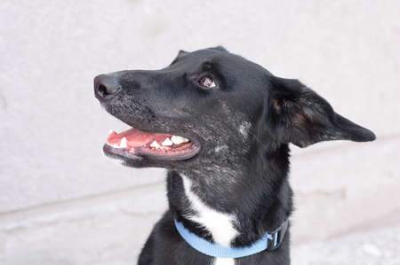 A yard black dog. Close-up portrait. Homeless animals. 스톡 콘텐츠
