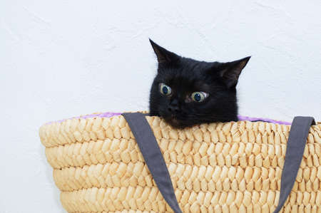 Close-up black cat sitting in a yellow wicker basket.
