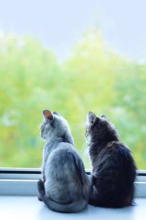 Two little gray kittens sitting on the window sill during the summer day.