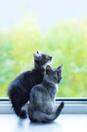 Two little gray kittens sit on the windowsill on a summer day. Looking at the street.