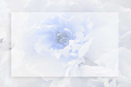 Postcard blank. White flower and rectangular transparent frame. Place for text. 스톡 콘텐츠