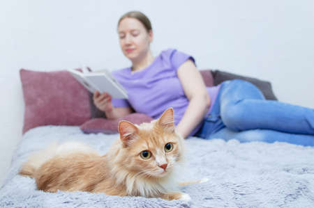 Beige cat and young caucasian woman with a book on the bed. Selective focusing. Фото со стока