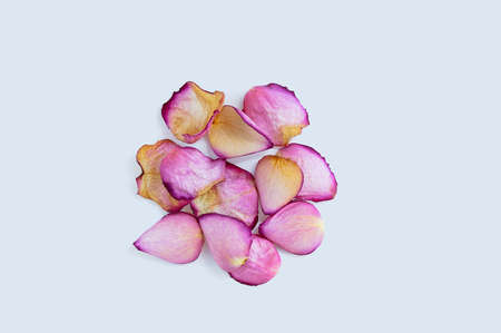 Heap of pink rose dry petals on a white background.