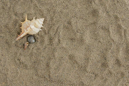 Marine summer background. Seashell and seashells on the sand. Place for your text. 스톡 콘텐츠
