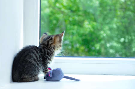A small gray kitten sitting on the windowsill with a soft toy looks out the window to the street.