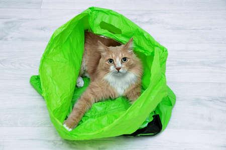Beige cat in a green plastic bag lying on the floor of the room. Standard-Bild