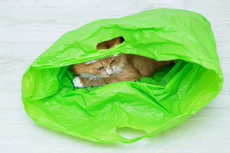Ginger cat lying in a green plastic bag on the white wooden floor of the room.
