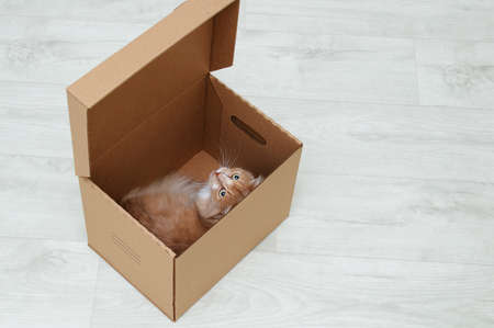 The ginger cat lies in a cardboard box in the room. Looking towards the camera. Standard-Bild