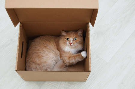The ginger cat lies in a cardboard box in the room. Standard-Bild