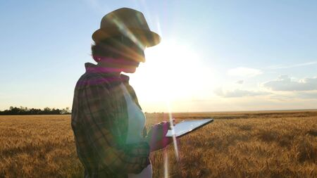 Young woman farmer in wheat field on sunset background. A girl plucks wheat spikes, then uses a tablet.