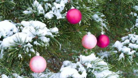 Close-up of snow-covered branches of spruce, decorated with Christmas bright burgundy balls in the forest 스톡 콘텐츠