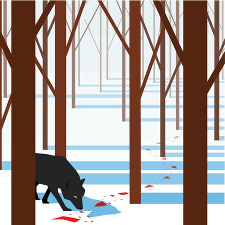 wolf sniffs blood stains in the winter forest