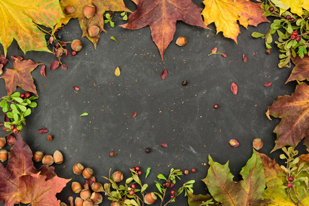 Autumn frame with nuts, cranberry, blackberry and autumn leaver, top view, copy space.
