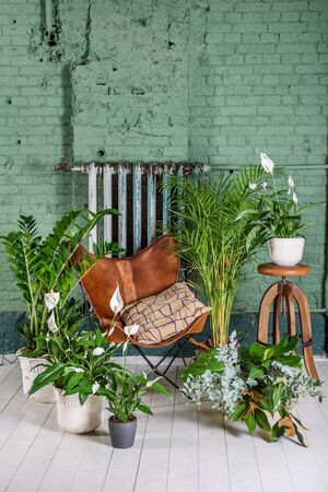 Green plants at home. Interior of a room with leather vintage chair. Brick wall background.