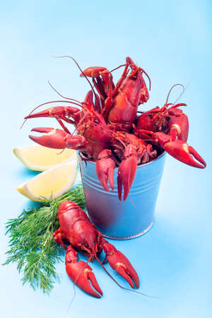 Crayfishes in iron bucket and on a blue background served with dill and lemon, vertical 版權商用圖片
