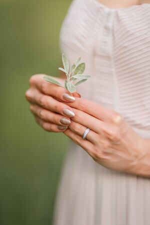 Olive leaves in female hands. Hands of the bride. Wedding in Montenegro
