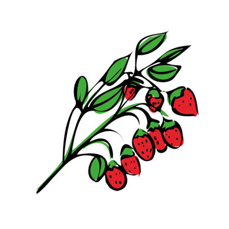 illustration of colored strawberries on a white isolated background. Branch with berries.