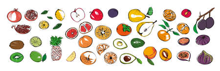A set of different seasonal fruit icons on a white isolated background. Stock vector illustration.