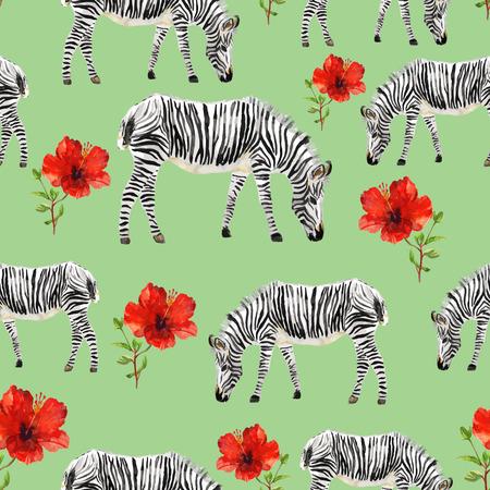 zebra: Pintado a mano acuarela de fondo sin fisuras. cebras aislados y hibiscos rojos sobre fondo verde. Ilustración del vector.