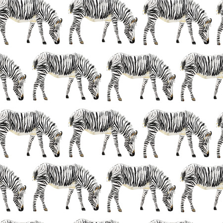Hand painted watercolor seamless zebra background. Vector illustration.