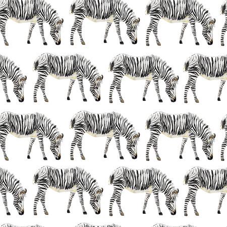 Handgeschilderde aquarel naadloze zebra achtergrond. Vector illustratie.