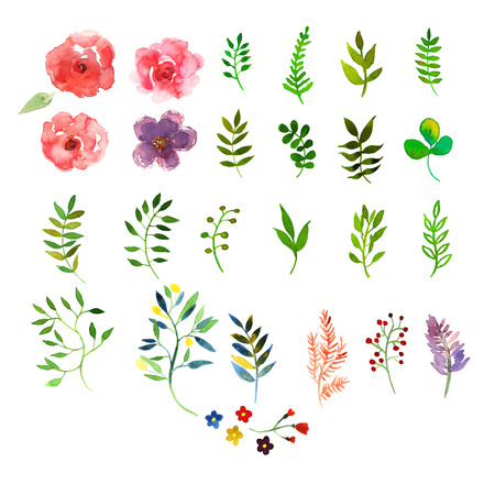 ilustration and painting: Vector floral set. Colorful floral collection with leaves and flowers, drawing watercolor. Design for invitation, wedding or greeting cards Illustration