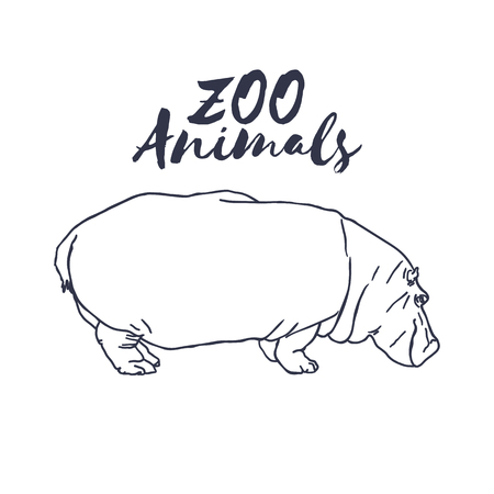 behemoth: Hand drawn isolated sketch hippopotamus. Wild animal. Vector
