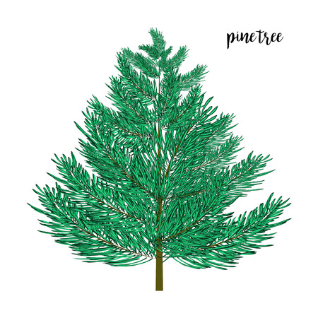 wite: Green Christmas pine tree isolated on wite. Vector illustration. Illustration