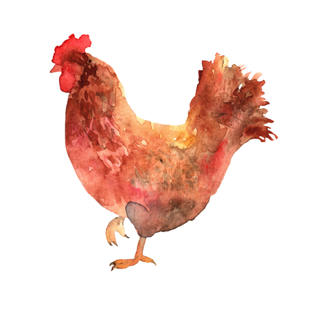 meat food: Chicken hand drawn in watercolor.