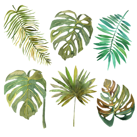 philodendron: Floral set. Collection with tropical leafs hand drawn in watercolor. Design for invitation, wedding or greeting cards.