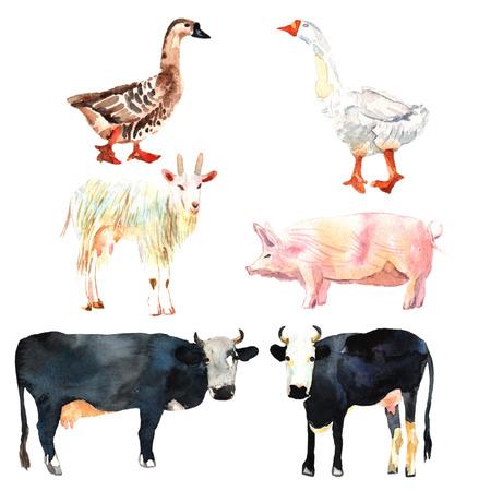 農場の動物は、水彩で描画を設定します。牛、アヒル、ヤギ、ブタ。 写真素材