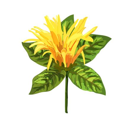 Yellow tropical plant. Mexican Honeysuckle, Orange Plume flower. Vettoriali