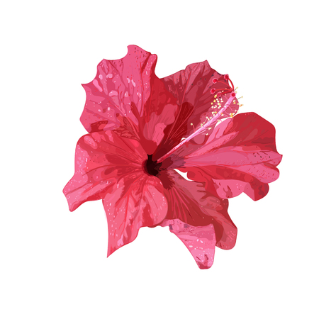 Red Hibiscus tropical plant, in Hand drawn  illustration isolated on white background.